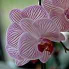 Orchid-Botanical-Garden_Attraction