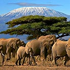 Mount-Kilimanjaro_Attraction
